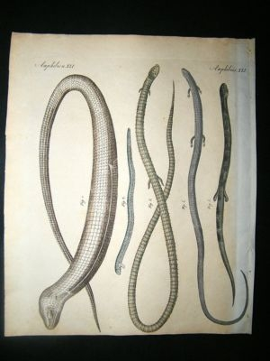 Antique Bertuch: C1800 Snakes. Antique Print. Hand Coloured.