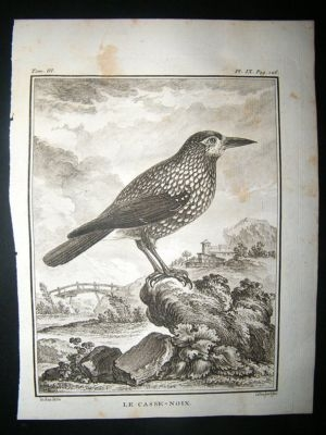 Antique Bird Print: C1775 Nutcracker, Buffon Copper Plate