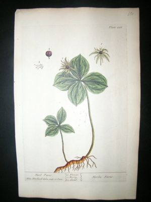 Blackwell:1737 Botanical Herb Paris. Fine Hand Coloured