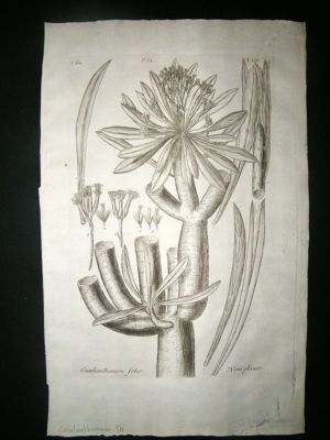 Dillenius 1774 Folio Botanical Print. Caculianthemum 54