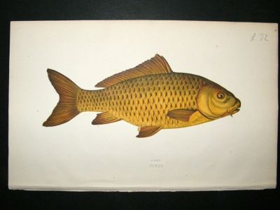 Antique Fish Print: 1869, Carp, Couch