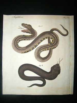 Antique Bertuch: C1800 Snakes. Fine Hand Coloured Print.