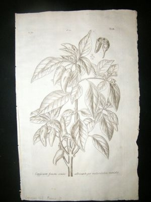 Antique Dillenius 1774 Folio Botanical Print. Capsicum Chili Pe