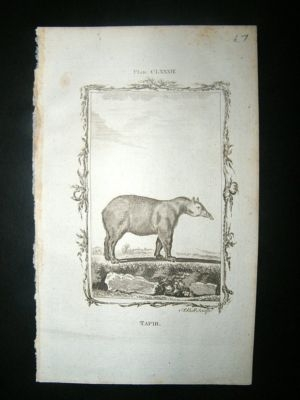Antique Buffon: 1785 Tapir, Antique Print