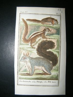 Antique Buffon: C1780 Flying Squirrel etc, Hand Color Print