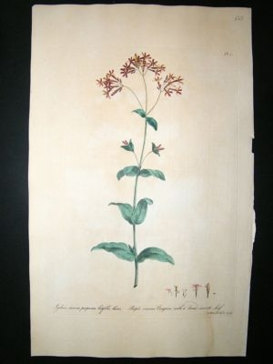 Antique John Edwards: 1770 folio botanical. Purple Viscous Camp
