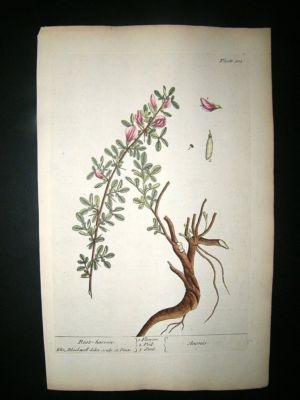 Antique Blackwell:1737 Botanical Rest Harrow, Hand Coloured.