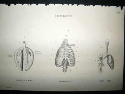 Medical: C1875 Respiration, Antique Print