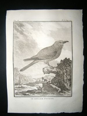 Antique Bird Print: C1775 European Roller, Buffon Copper Plate