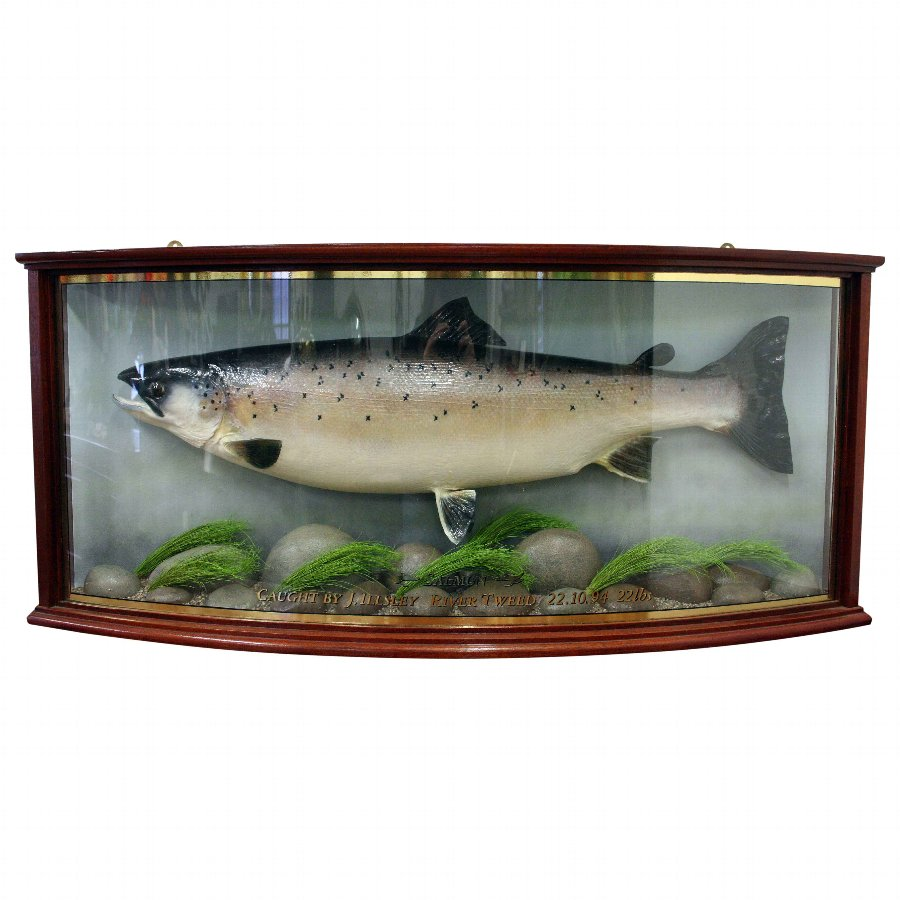 Taxidermy Stuffed Salmon