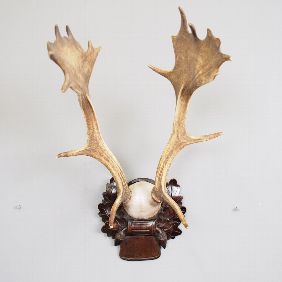 Pair of Antlers on Plaque