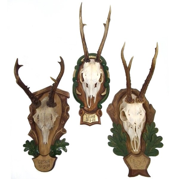 Set of 3 Roe Deer Antlers