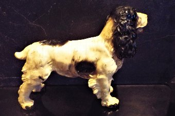 Antique Victorian Cocker Spaniel dog with glass eyes