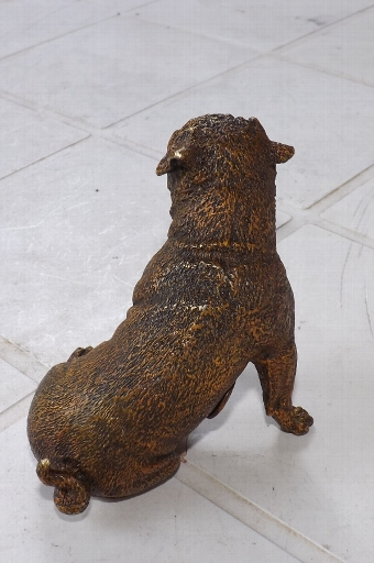 Antique Austrian cold painted Pugh dog signed stunning quality. CB