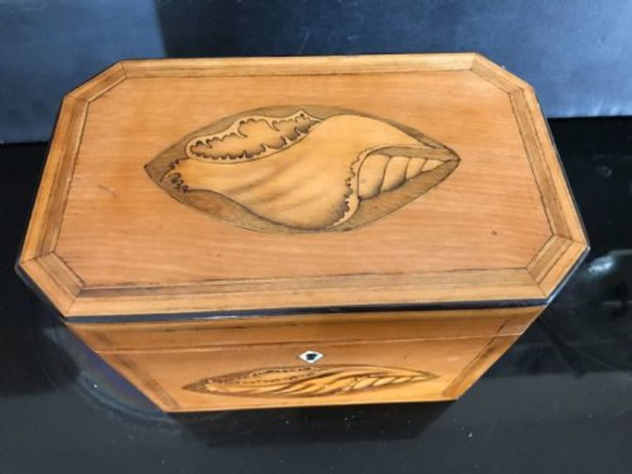 Antique Tea caddy Satinwood with shell inlays