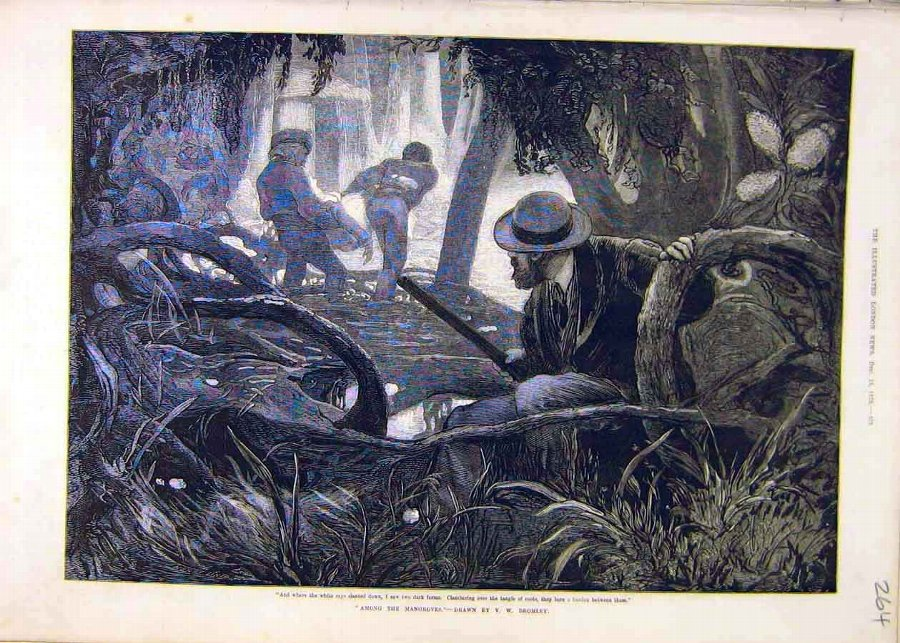 Print Among-Mangroves Bromley People Roots Old 187