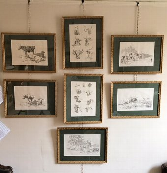 Antique A Rare Set of Seven Cattle Lithographs 1805/6