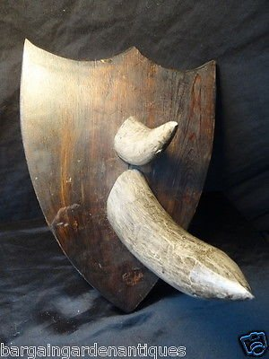 Vintage Rhino Horns Hunting Wall Hanging Plaque Wood Shield Frame