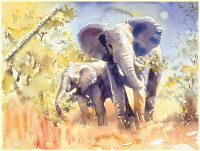 Collection of 9 NEW Wildlife High Quality Framed Prints By Eminent Artists - Price Reduced!