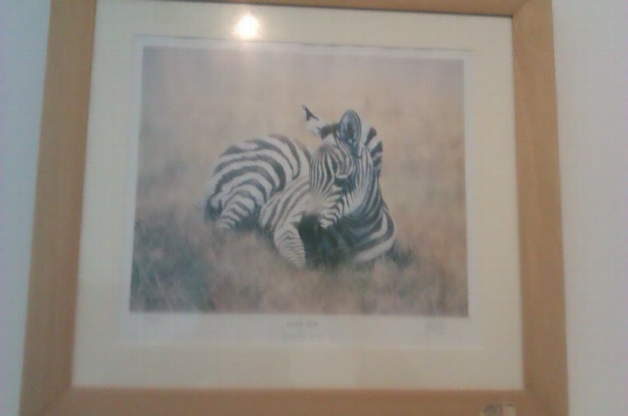 Antique Collection of 9 NEW Wildlife High Quality Framed Prints By Eminent Artists - Price Reduced!