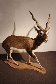 STUFFED ANTILOPE