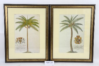 Antique Set of  four 19th century style prints of Palm trees