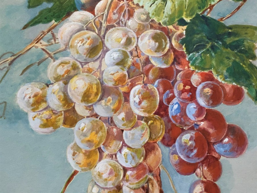 Antique Exceptional Original Vintage 20thc Still Life Grapes study Watercolour Painting