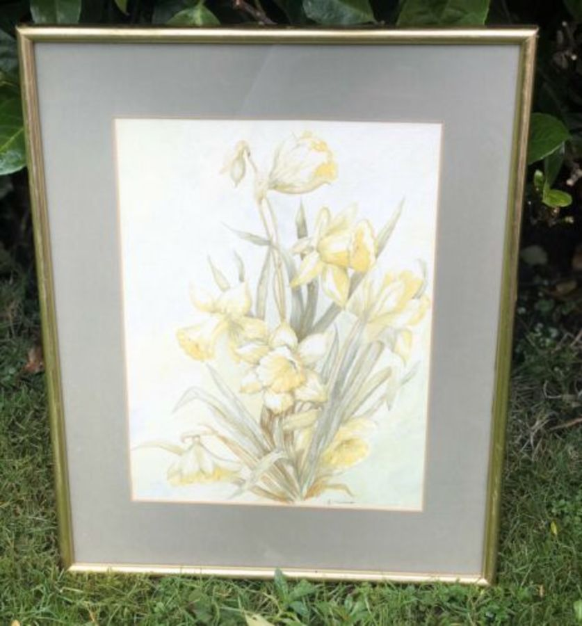 Antique Vintage Daffodil Flower Floral Signed Watercolour Painting