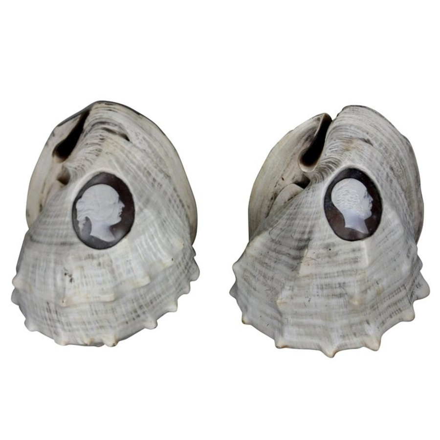 A PAIR OF RARE SHELL CAMEOS DEPICTING QUEEN VICTORIA & ALBERT