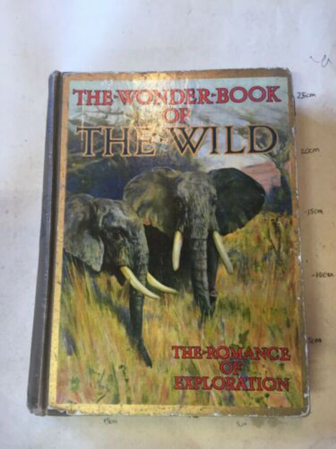 Wonder Book Of The Wild Game Exploration London 20 Colour Plates
