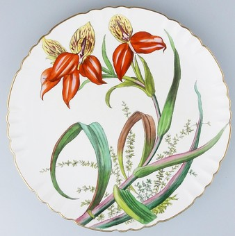 Antique Minton Antique English Porcelain a beautiful Botanical Plate C3108 C.19thC